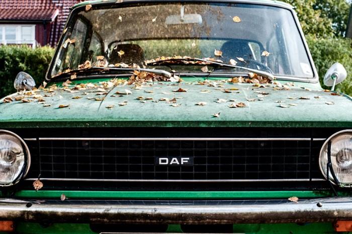 DAF parked under Birch
